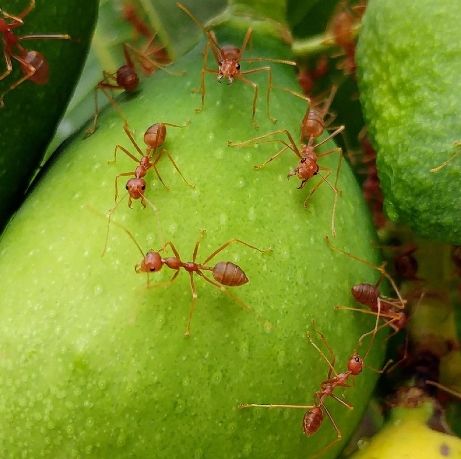 Fire Ant & Chinch Bug Control